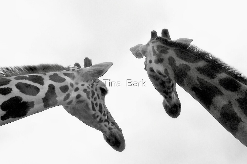 Giraffes by Tina  Bark