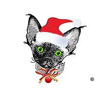 Devon Rex Christmas Kitten by devonzone
