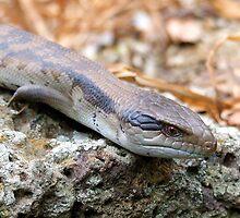 Blue Tongue Lizard by Coralie Alison