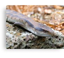 Blue Tongue Lizard Canvas Print