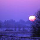 Weekends Purple Haze by velveteagle