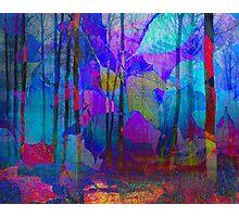 Blue WoodLand Photographic Print