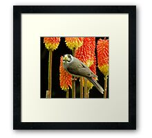 Miner Bird Framed Print