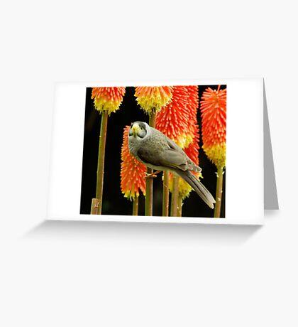 Miner Bird Greeting Card