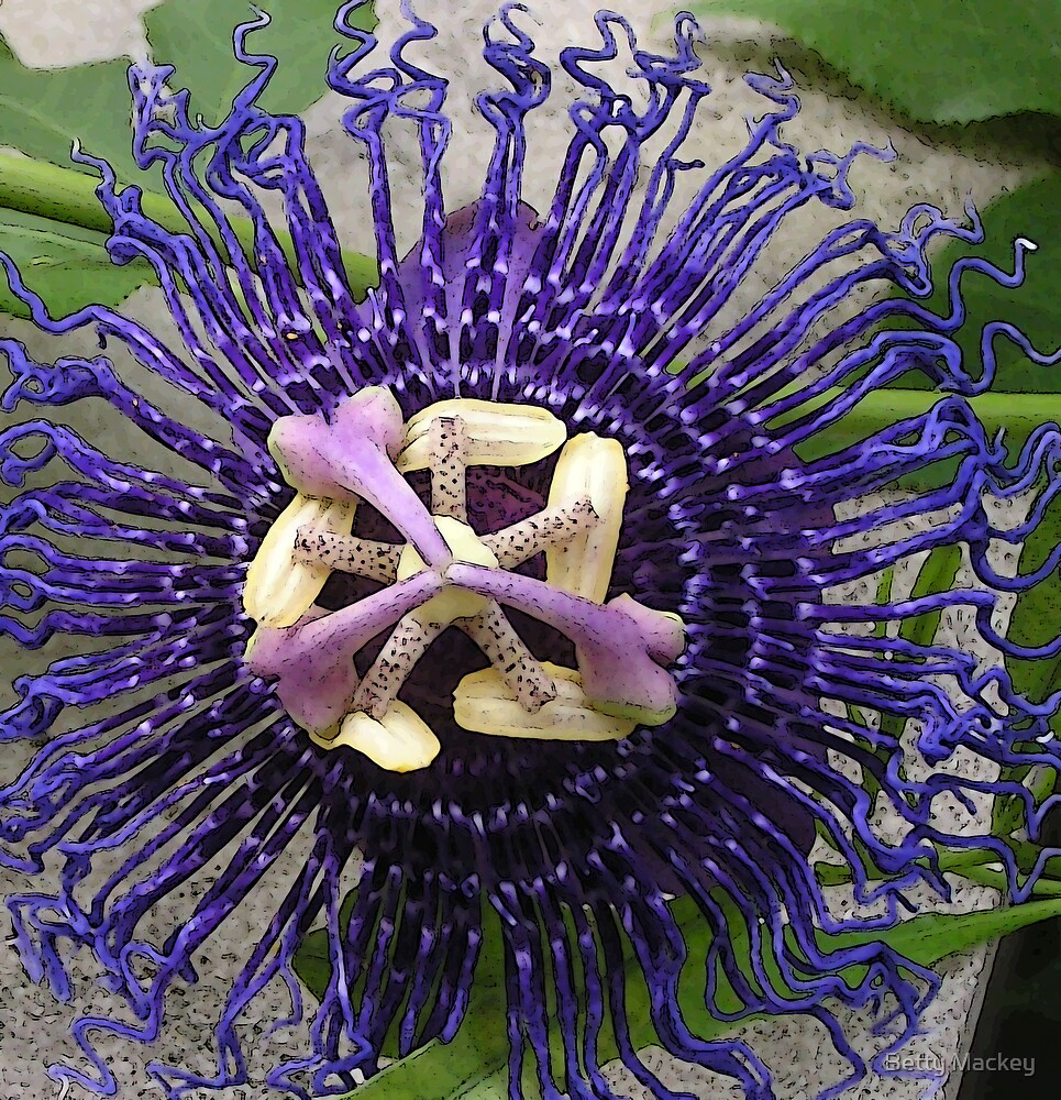 Passion Flower, Posterized by Betty Mackey