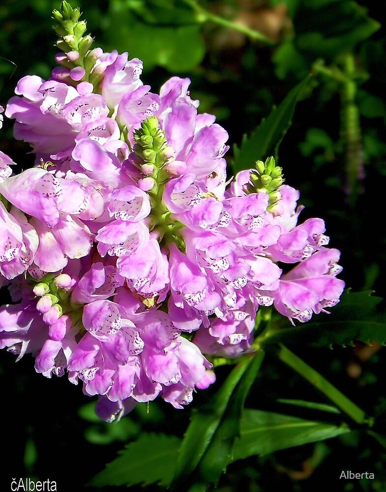 Pretty Pink Flower by Alberta