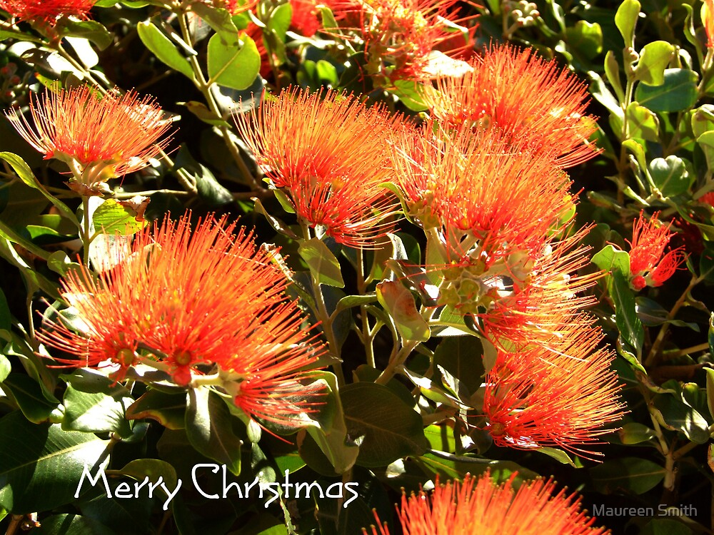 New Zealand Christmas Tree by Maureen Smith