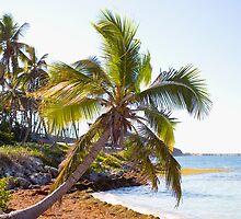 Island Palms by Susan Gottberg