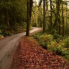 Olympic National Park by LizzieMorrison