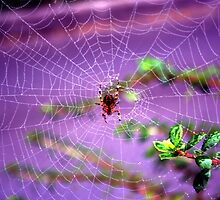 Web Action by hosierar