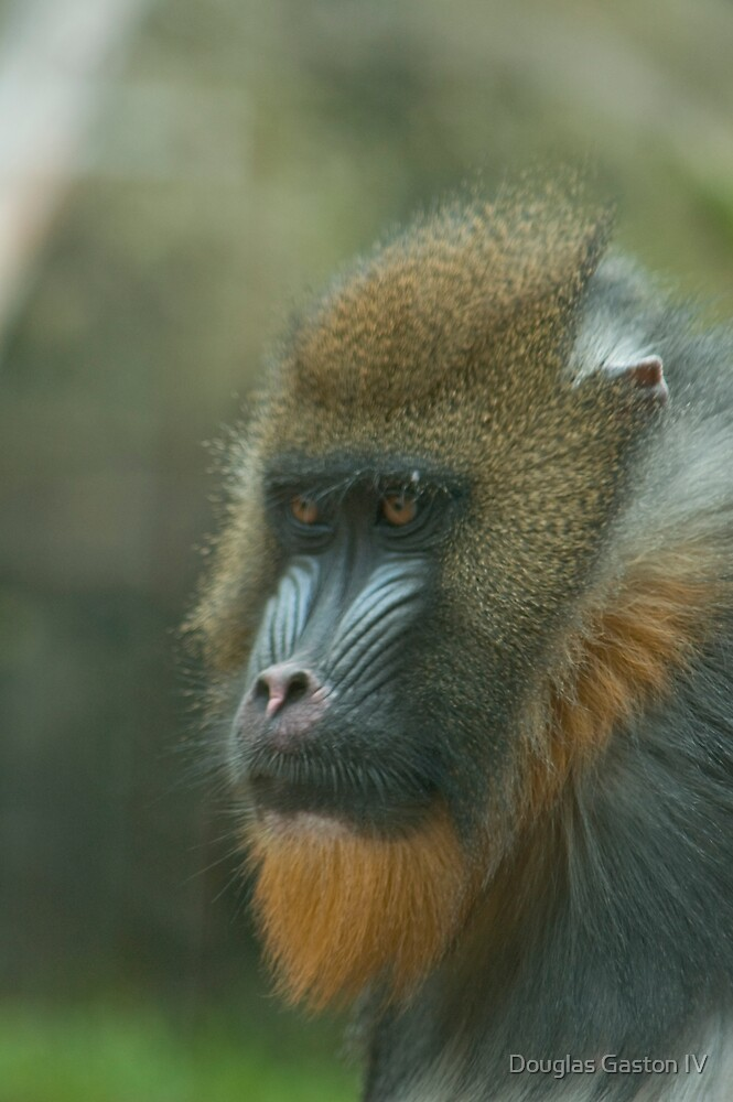 Primate by Douglas Gaston IV