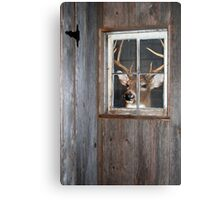 Buck Season Metal Print
