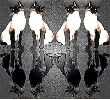 Siamese Reflections Photographic Print