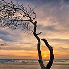 Lone Tree Sunrise by Cheryl Styles