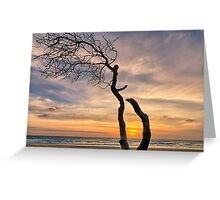 Lone Tree Sunrise Greeting Card