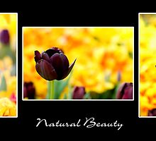 Natural Beauty by Gayle Shaw