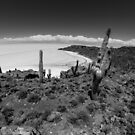 Cactus Island on Bolivia's Salt Flats by Richard Shakenovsky