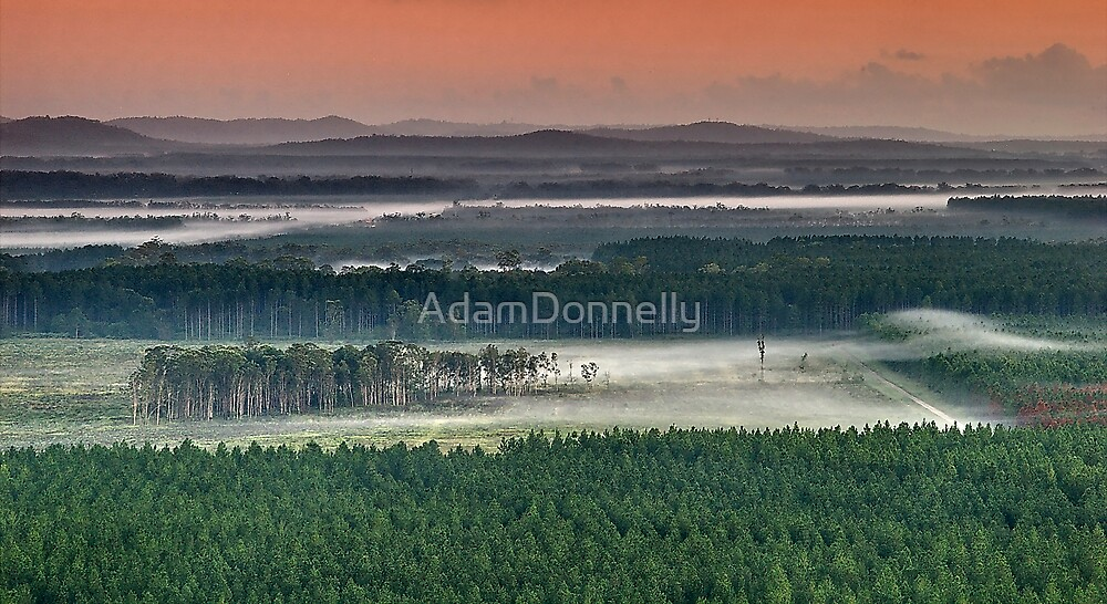 Invasion of the Plantation Pines by AdamDonnelly