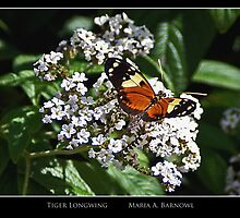 Tiger Longwing - Cool Stuff by Maria A. Barnowl