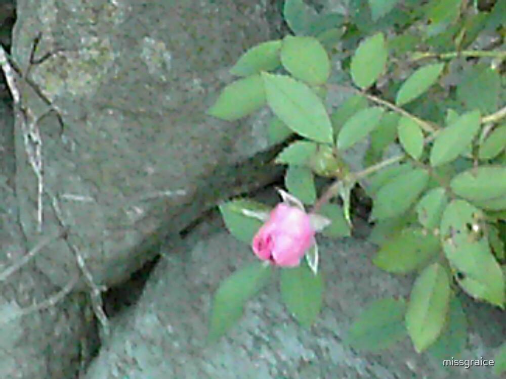 rose on rock by missgraice
