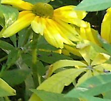 Giant daisies by missgraice