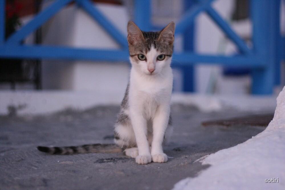 Santorini Cat by sotiri