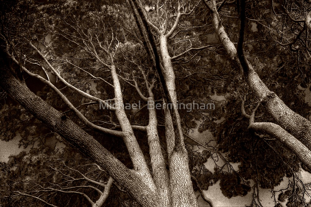 The trees are moving... by Michael  Bermingham