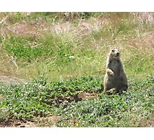 Prairie Dog, Wyoming Photographic Print