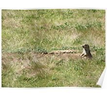 Prairie Dog, Wyoming Poster