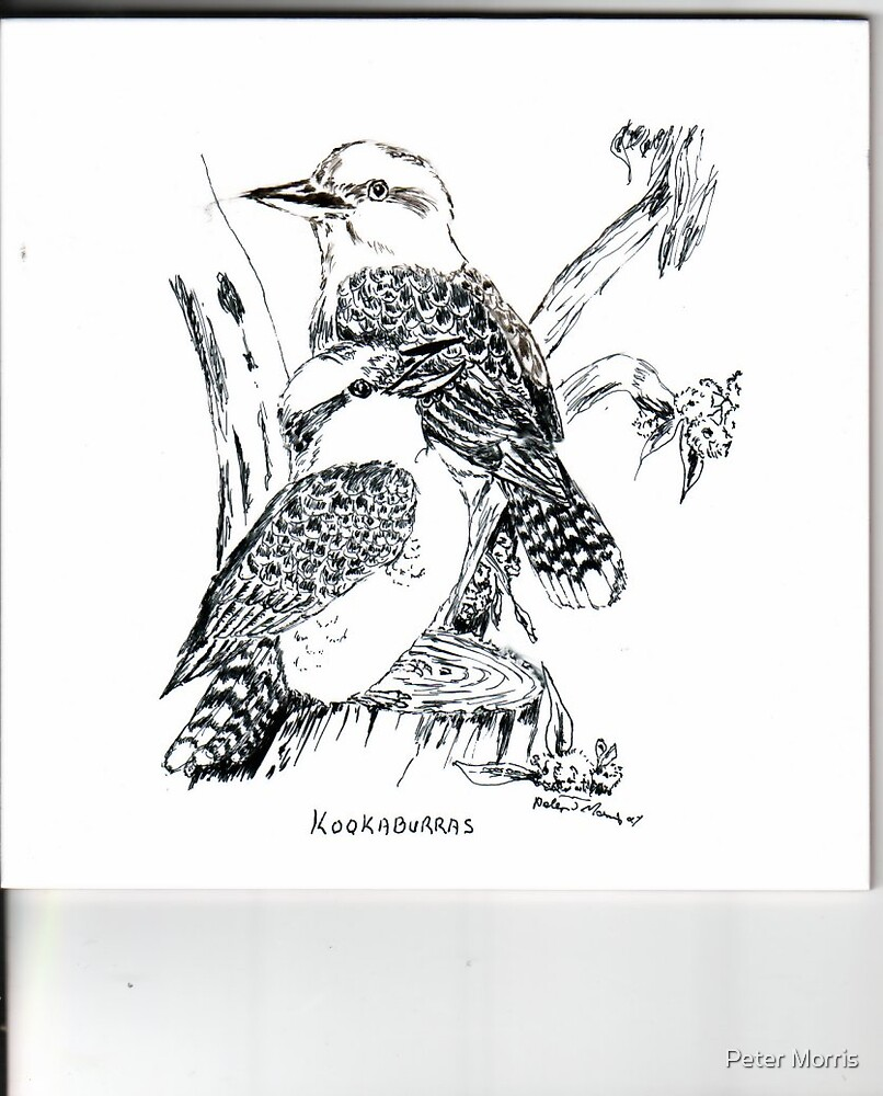 """Laughing Kookaburras by Peter Morris"