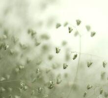 soft... by Zane  Yau