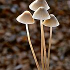 Side lit Fungi by kitlew