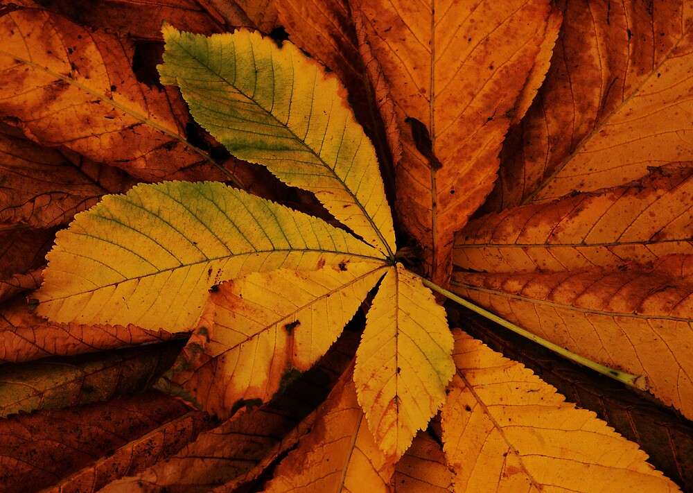 Autumn's Fallen by Glen Birkbeck