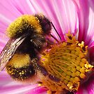 Pollen-coated by DaveP