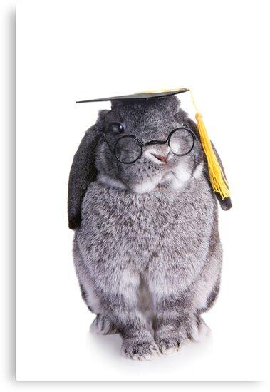 Graduate Bunny by idapix