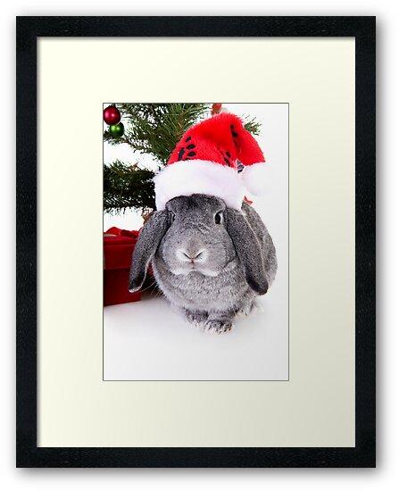 Christmas Rabbit by idapix