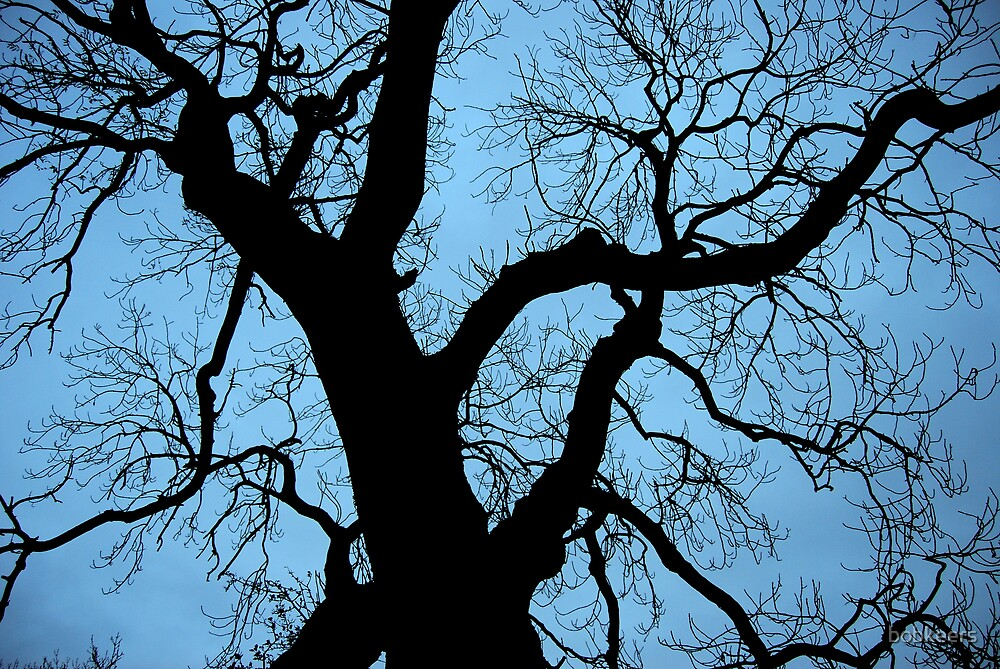 Branches by bobkeers
