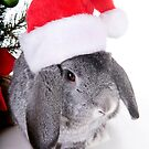 Christmas Rabbit by idapix