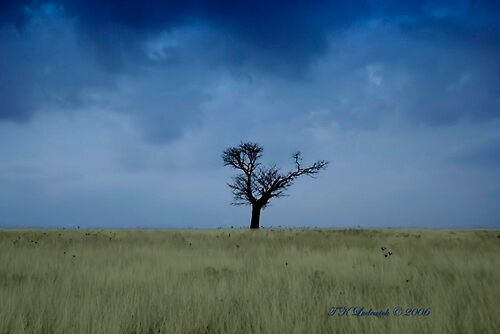 Lone Tree by grinandbearit