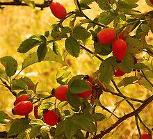 Hipberries by noirerose