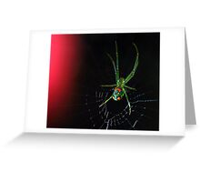 orchard orbweaver Greeting Card