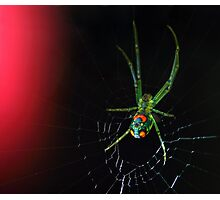 orchard orbweaver Photographic Print