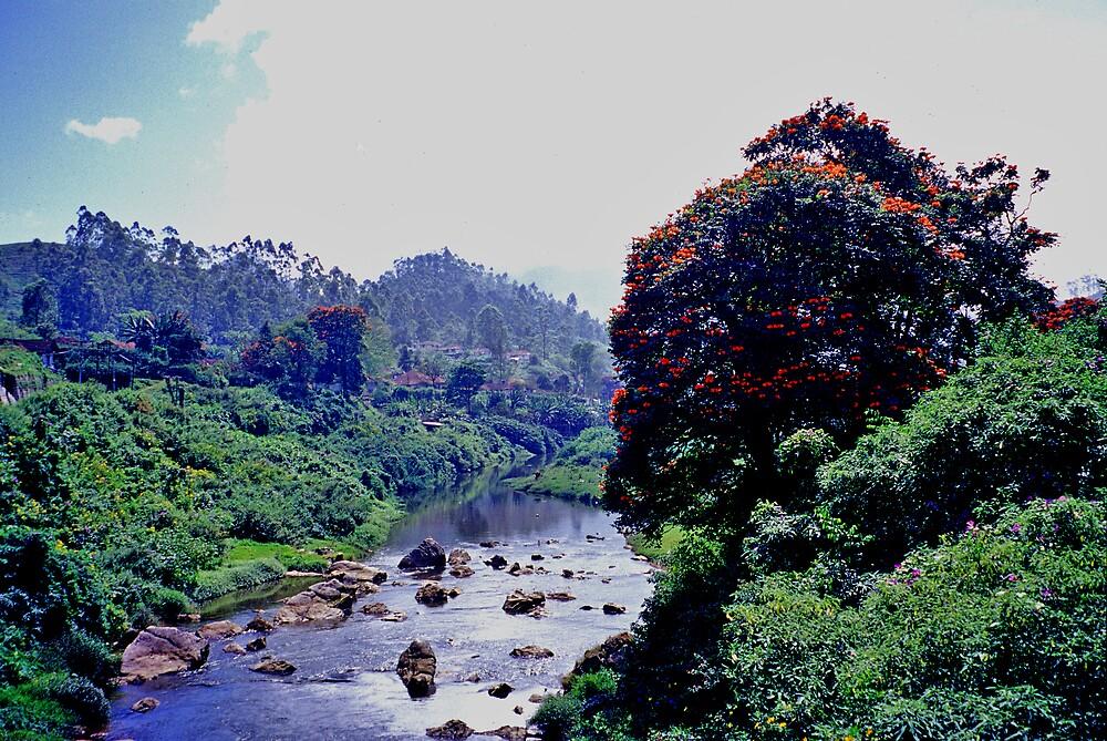 Munnar,Kerala,India by Rok Cuder