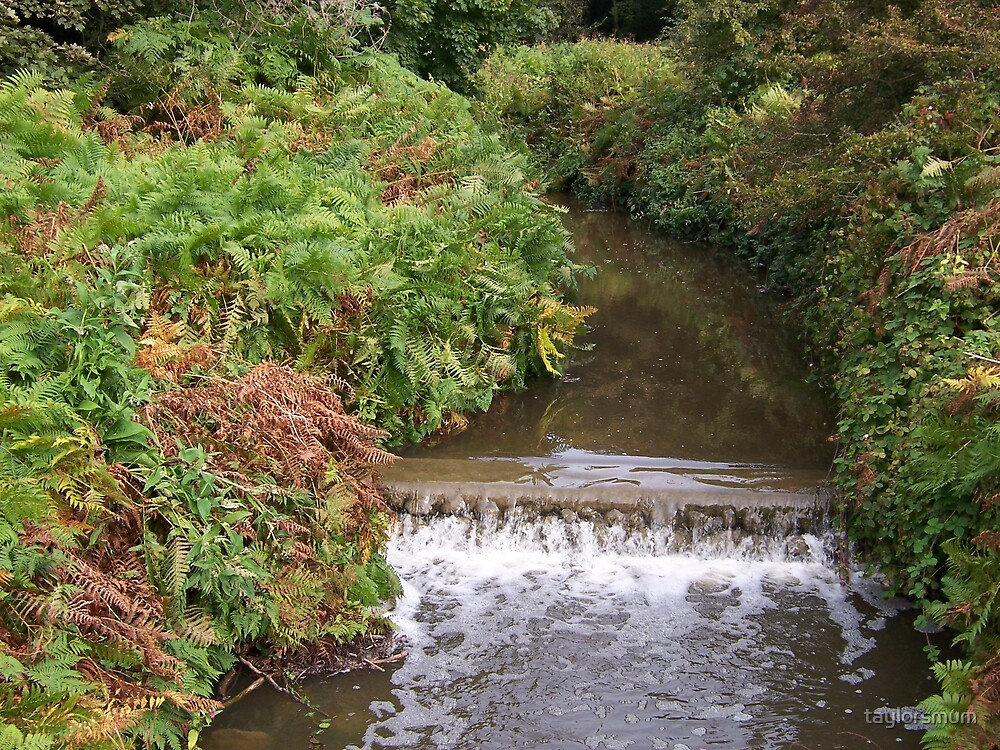 little stream by taylorsmum