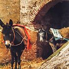 Working mules, Morocco by indiafrank