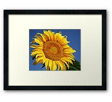 Big Sunflower Framed Print