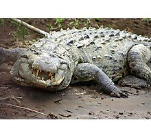 Large Croc Photographic Print