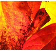 Autumnal Photographic Print