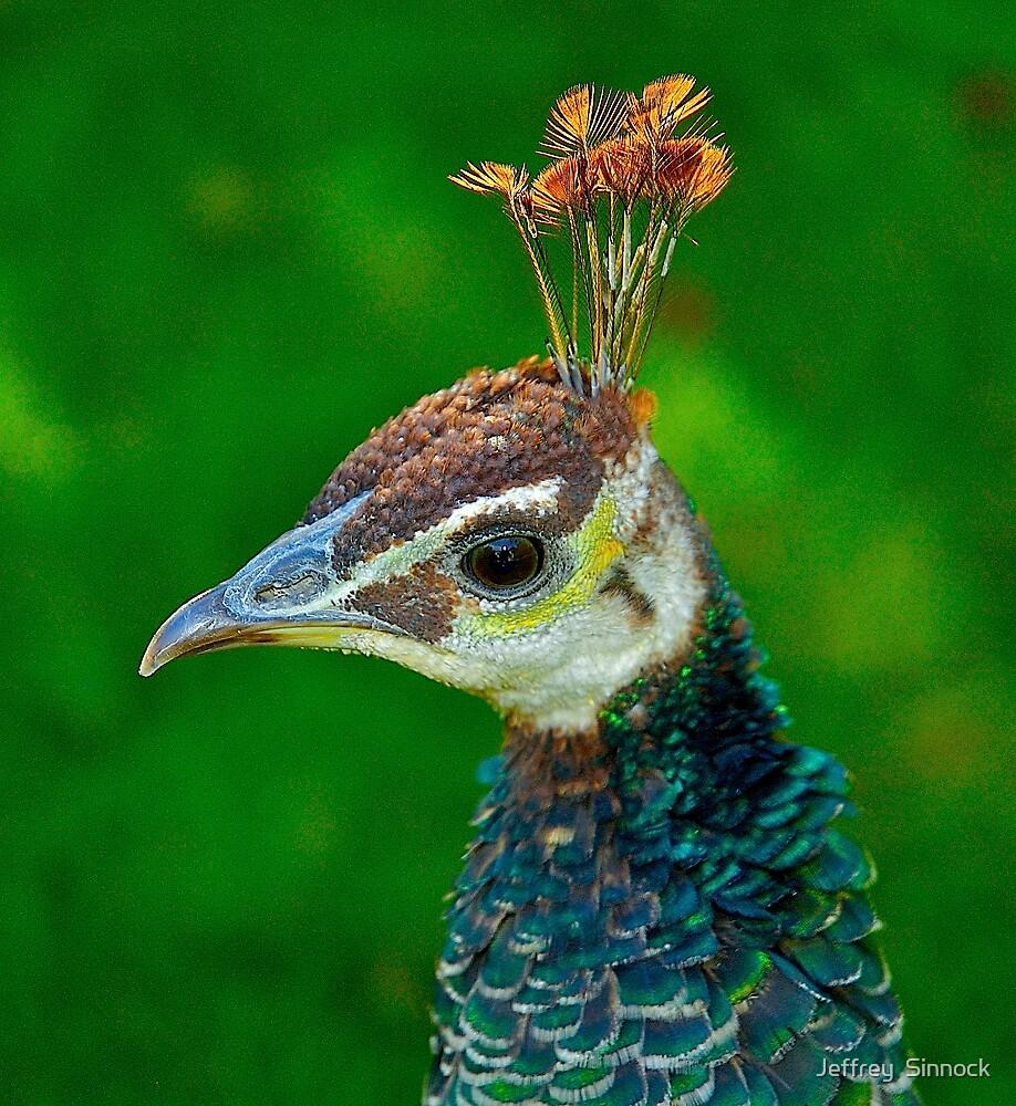 Peacock head by Jeffrey  Sinnock