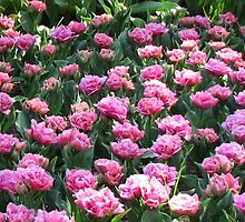 Parade of Pinks - Tulips in the Keukenhof Gardens by BlueMoonRose